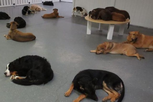 Several dogs laying down during naptime at the Wigglebutt Doghouse