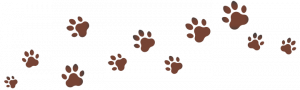 Dog paw print graphic used as section divider