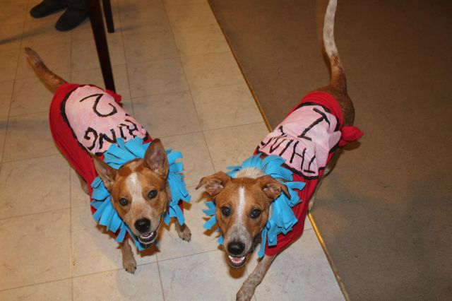 Two dogs in costumes as Dr. Seuss's Thing One and Thing Two